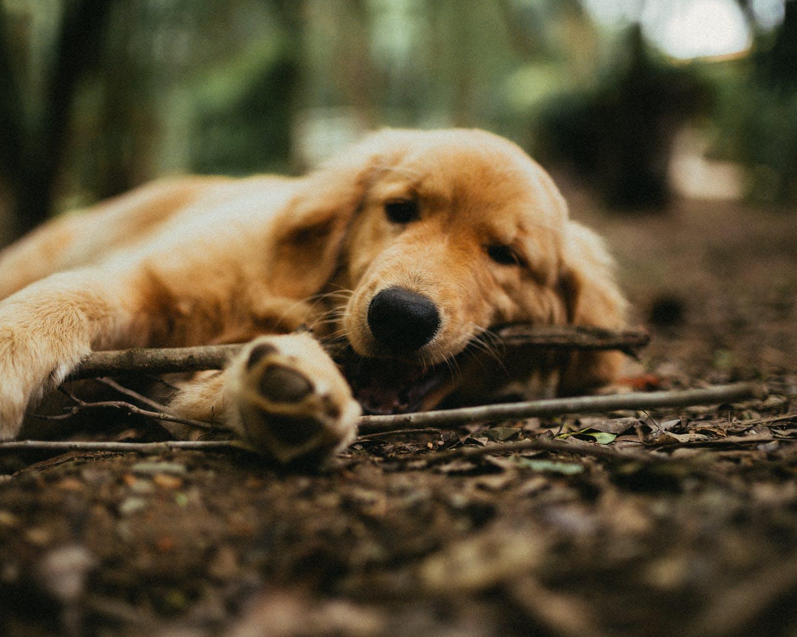 close up photo of dog biting branch