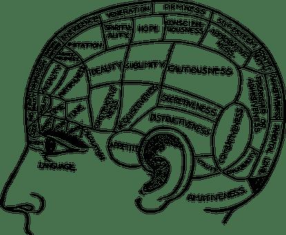 brain-2029363__340