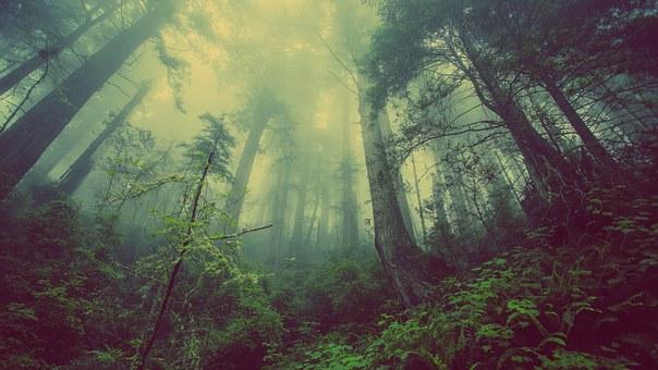 forest-931706__340.jpg
