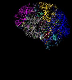 cranium-3244118__340.png