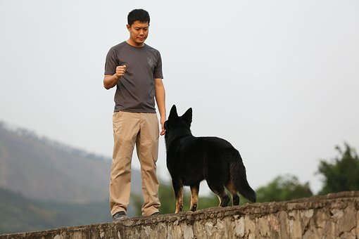 shepherd-3494519__340.jpg